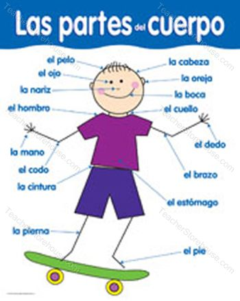 Printables Body Parts In Spanish Worksheet worksheets spanish body parts worksheet laurenpsyk free clipart kid partes del cuerpo
