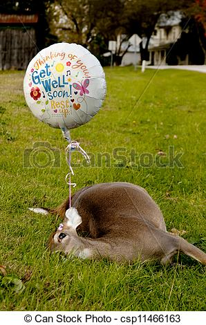 Image Of Get Well Soon   Deceased Deer With A Get Well Soon Balloon