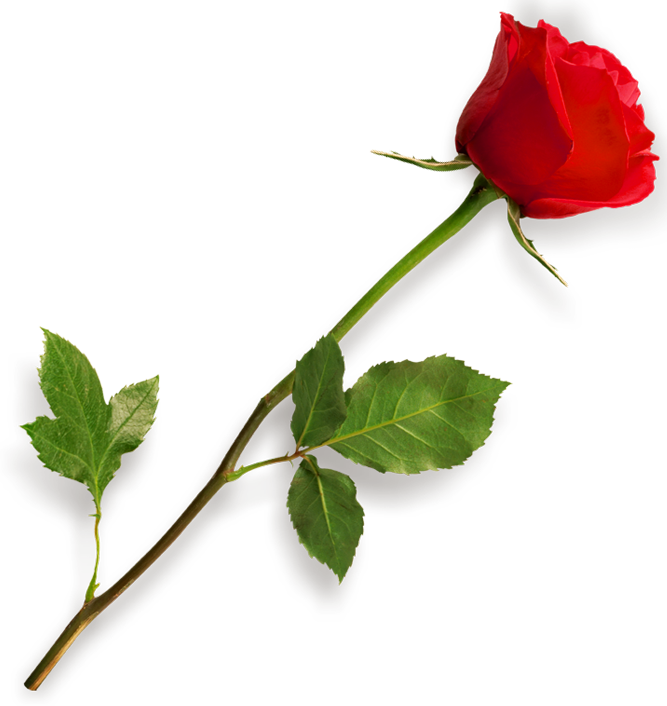 Long Stem Red Rose Clipart - Clipart Kid