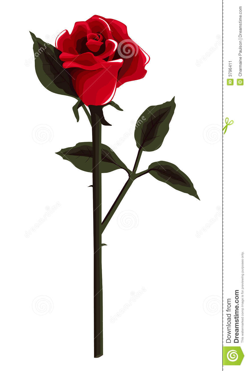 The Red Rose Is One Of The Most Universal Of All Symbols That Caries