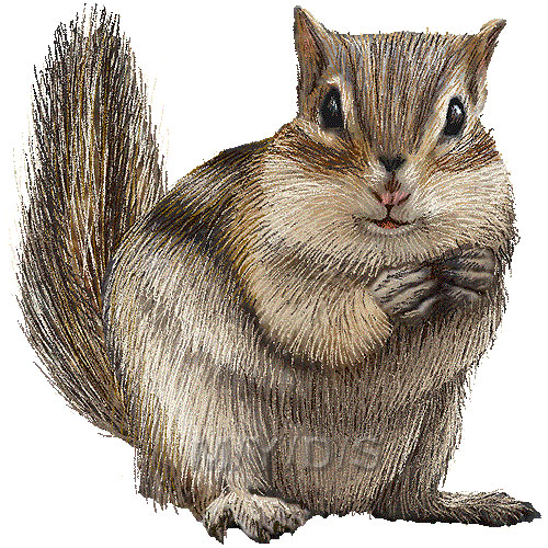 Chipmunk Clipart Graphics  Free Clip Art
