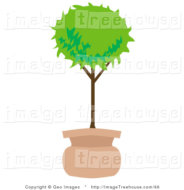 Clipart Of A Potted Tree In The Shape Of A Ball On White