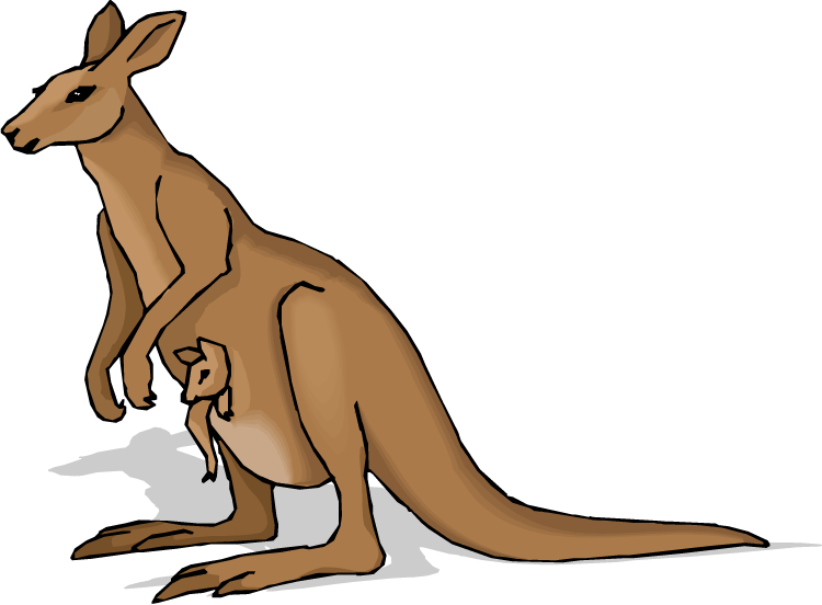 Kangaroo images clip art