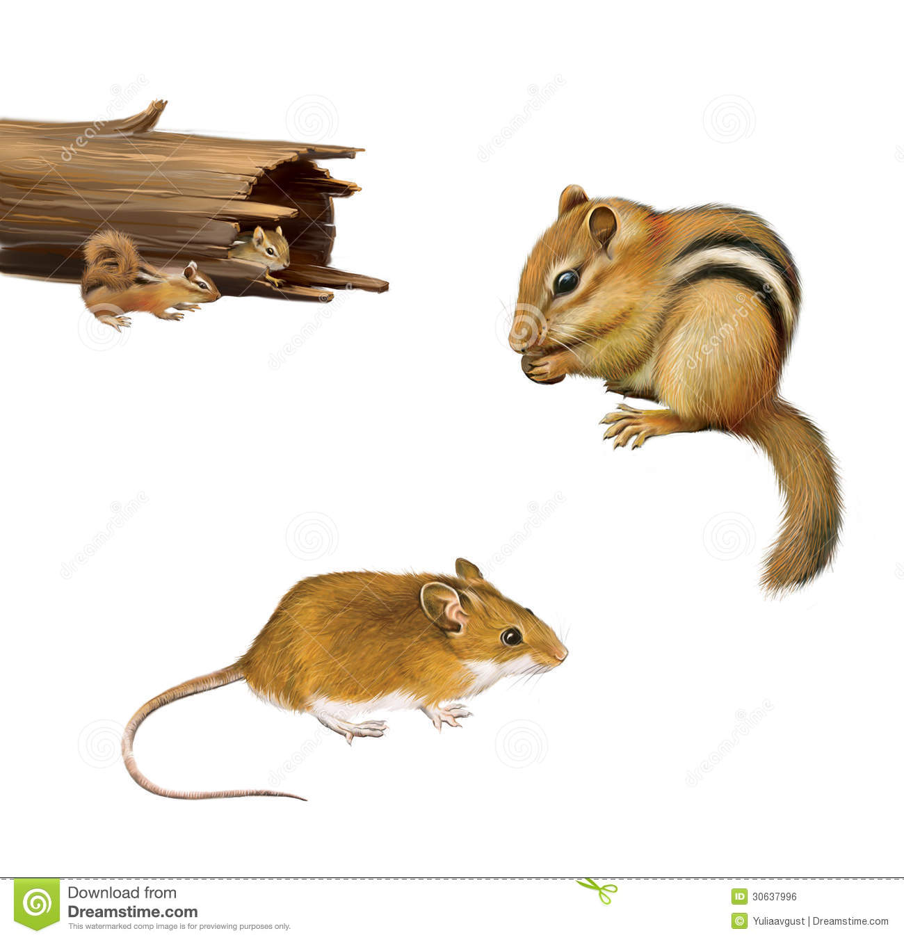 Rodents  Chipmunk Eating A Nut Yellow Brown Mouse Two Chipmunks In A