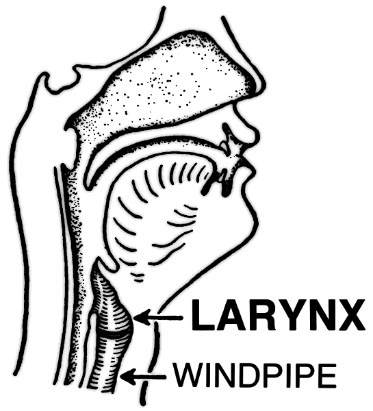 Www Wpclipart Com Medical Anatomy Mouth And Throat Larynx Png Html