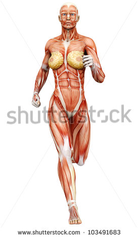 Muscle Woman Clipart Muscle Woman Running   Stock