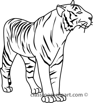Clip Art Tiger Clipart Black And White tiger black and white clipart kid animals 32804 outline classroom clipart