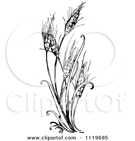 wheat black and white clipart clipart kid