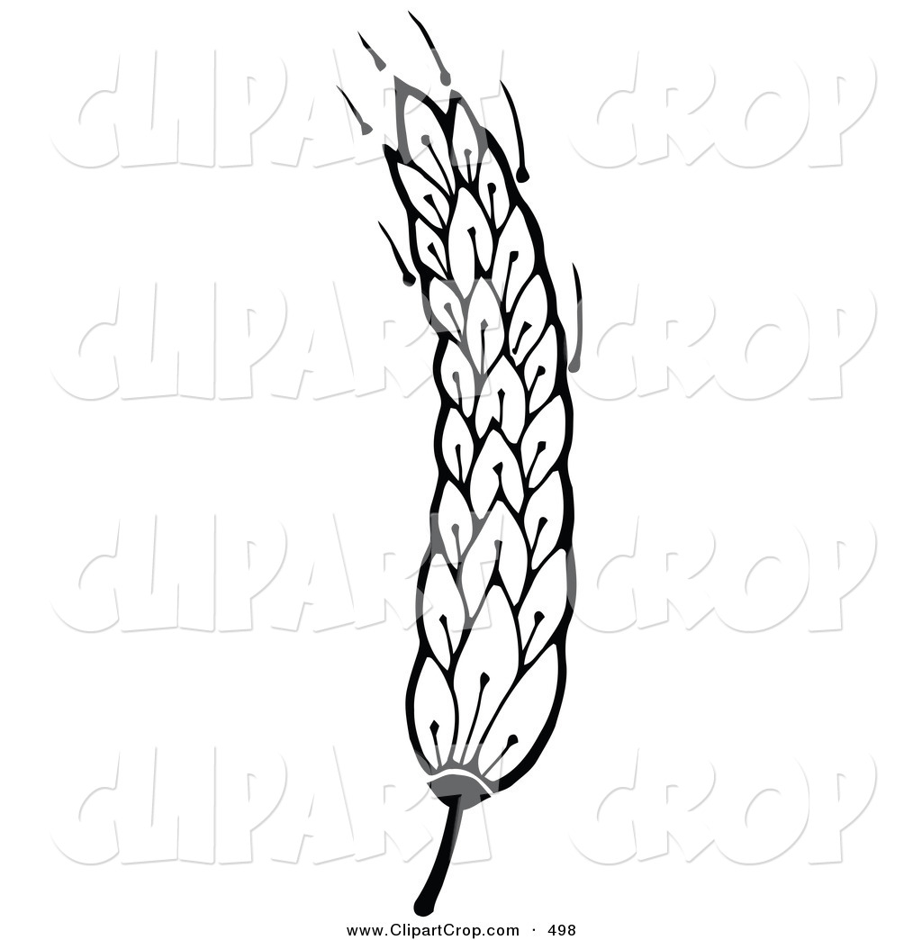 Displaying 19  Images For   Wheat Clip Art Black And White