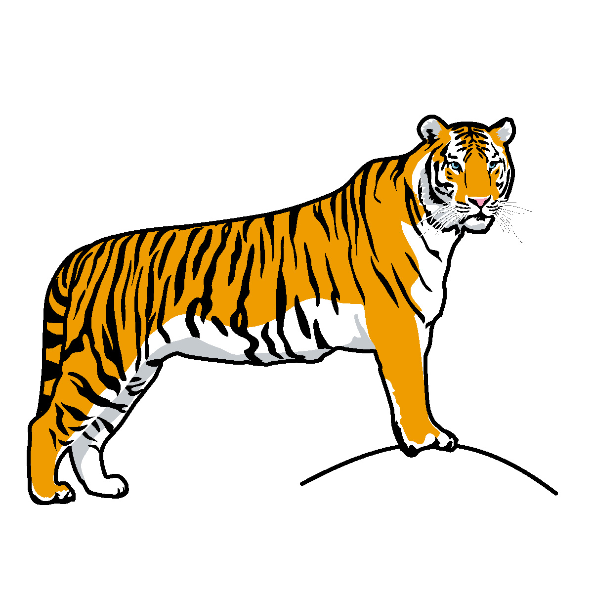 Tiger Clipart Black And White   Clipart Panda   Free Clipart Images