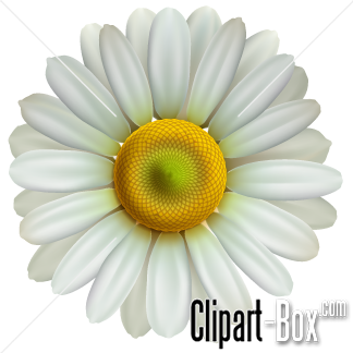 Related Daisy Flower Cliparts