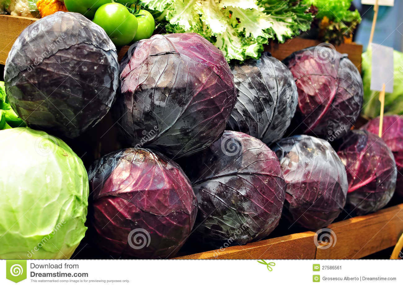 Purple Cabbage Stock Image   Image  27586561