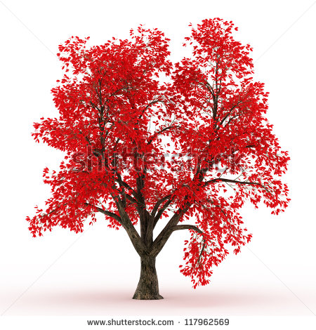 Sugar Maple Tree Silhouette 3d Rendered Maple Tree In