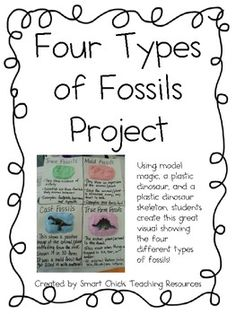 Four Types Of Fossils Project   Hands On Activity With Fossils