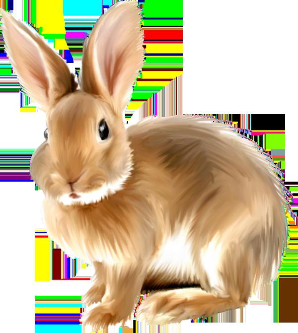 Bunny Clipart - Clipart Kid