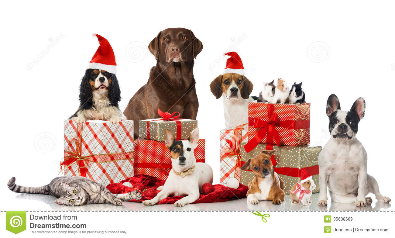 Dogs Rabbits And A Cat With Christmas Decoration Isolated On White