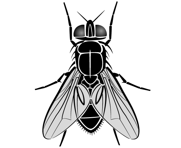 Fly Vector Image   123freevectors