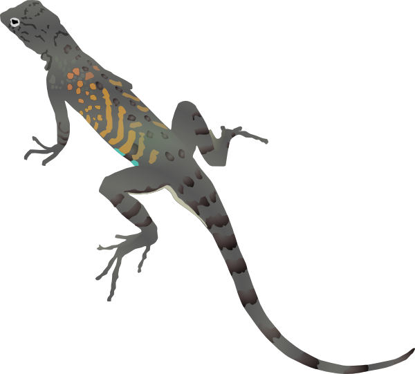 Free To Use   Public Domain Lizards Clip Art