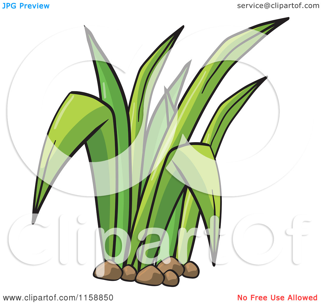 Grass Clipart Clipart Of A Green Blades Of Grass Royalty Free Vector