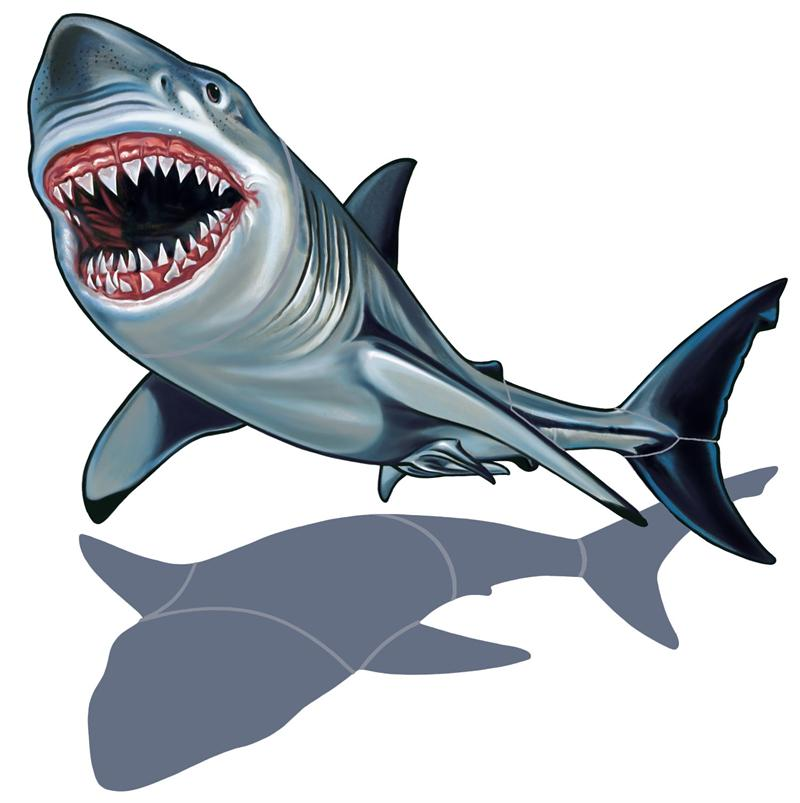 Great White Shark Clipart - Clipart Kid