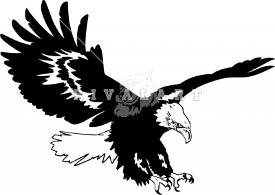 Eagle Soaring   Eagle Pictures   Mascots   Photographsimages Com