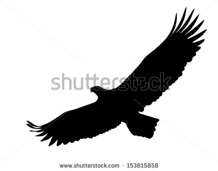 Eagle Soaring With Wings Opened Wide    Stock Vector