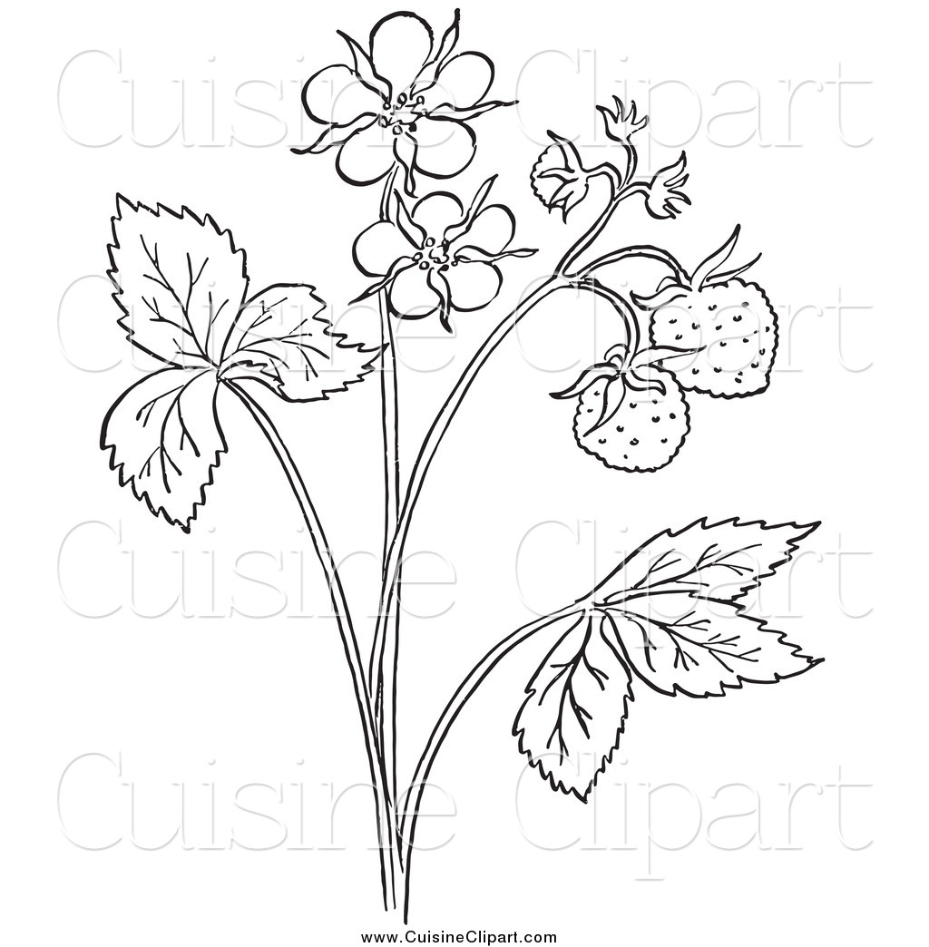 Cuisine Clipart Of A Black And White Strawberry Plant With Blossoms By