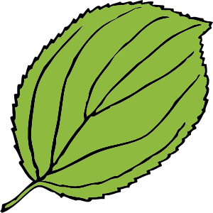 Jungle Leaf Black And White Clipart - Clipart Kid