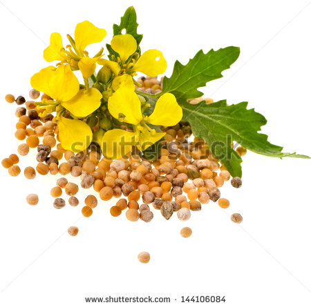 Mustard Seed Tree Clip Art Mustard Seeds Heap And Mustard