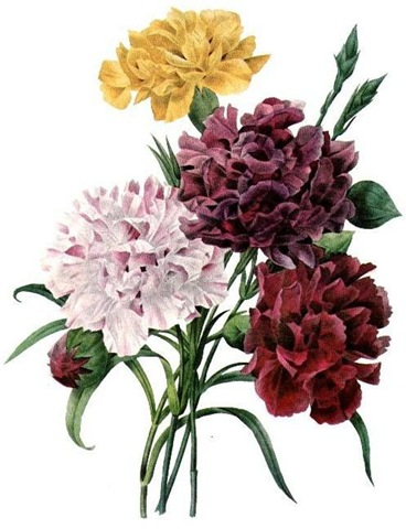 Free Vintage Clip Art Flowers Yellow Purple Pink Red Carnation Bouquet