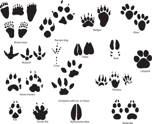 Badger Paw Prints Clipart Clipart Suggest