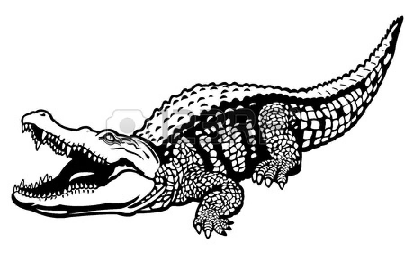 Crocodile Drawing Outline   Clipart Panda   Free Clipart Images