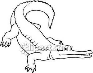 Outline Of A Alligator Http   Www Picturesof Net Pages 090219 152102