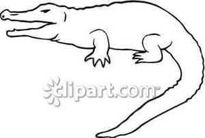 Outline Of A Crocodile   Royalty Free Clipart Picture