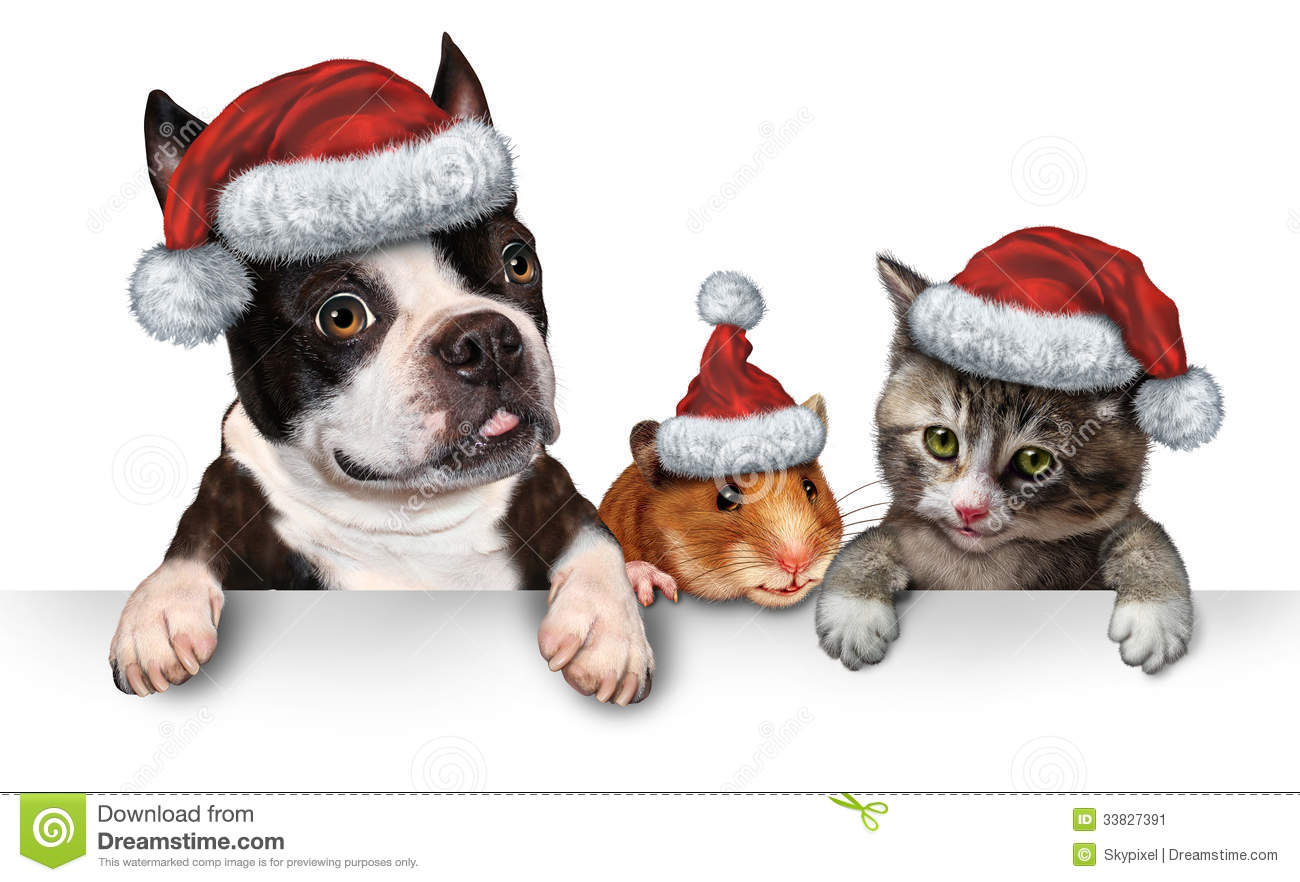 Dog Hamster And A Cat With A Santa Hat Hanging On A Horizontal White