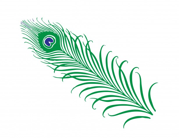 Peacock Feather Clipart Free Stock Photo   Public Domain Pictures