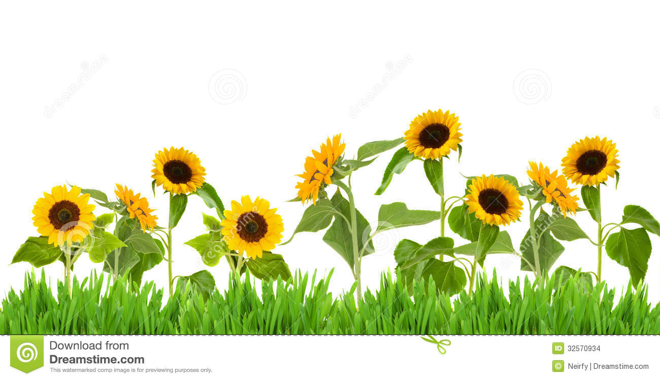 Sunflower Clipart Images | Wallpapers Gallery