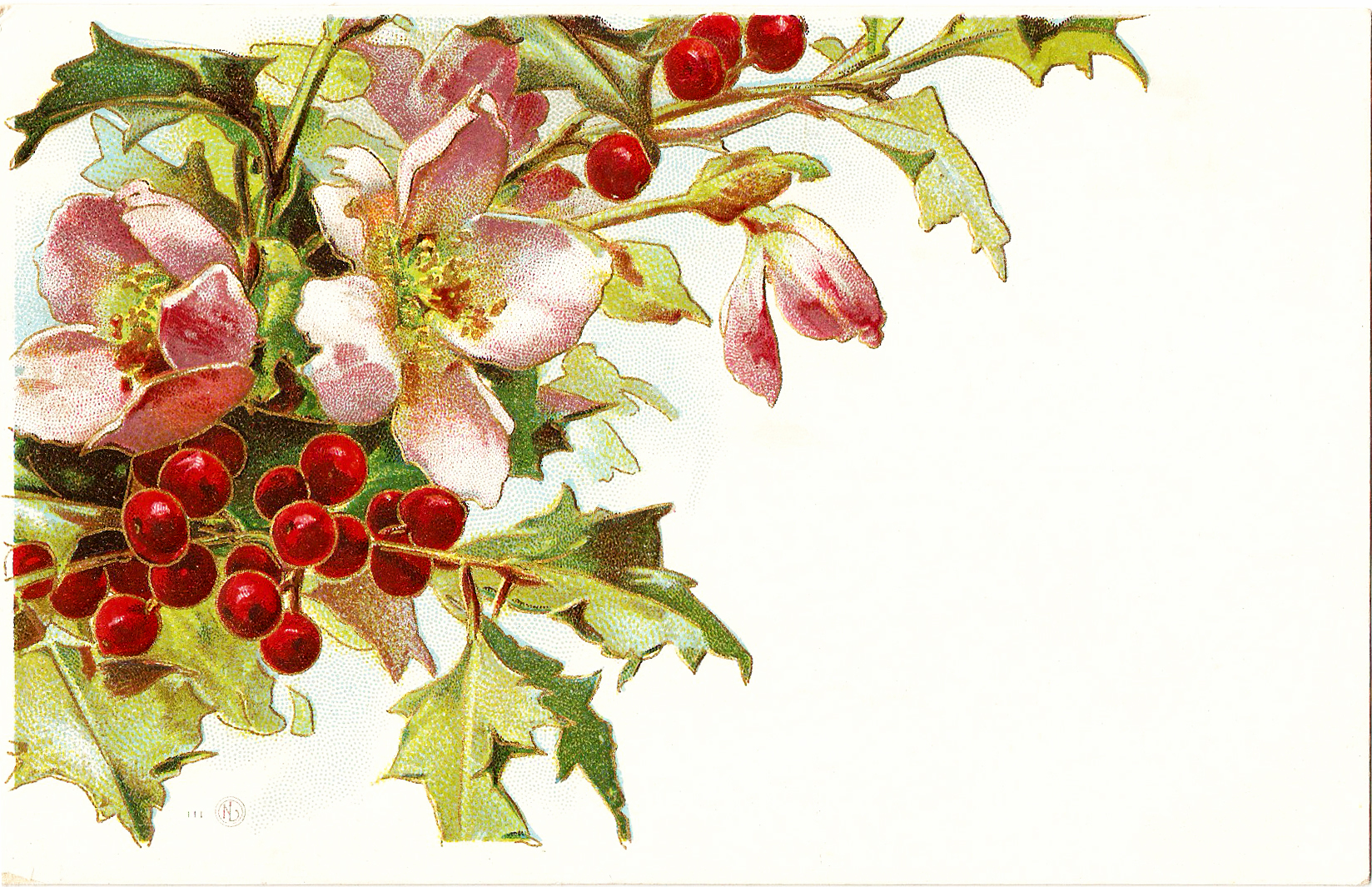 Free Vintage Clip Art   Christmas Holly And Pink Roses 1910 Postcard