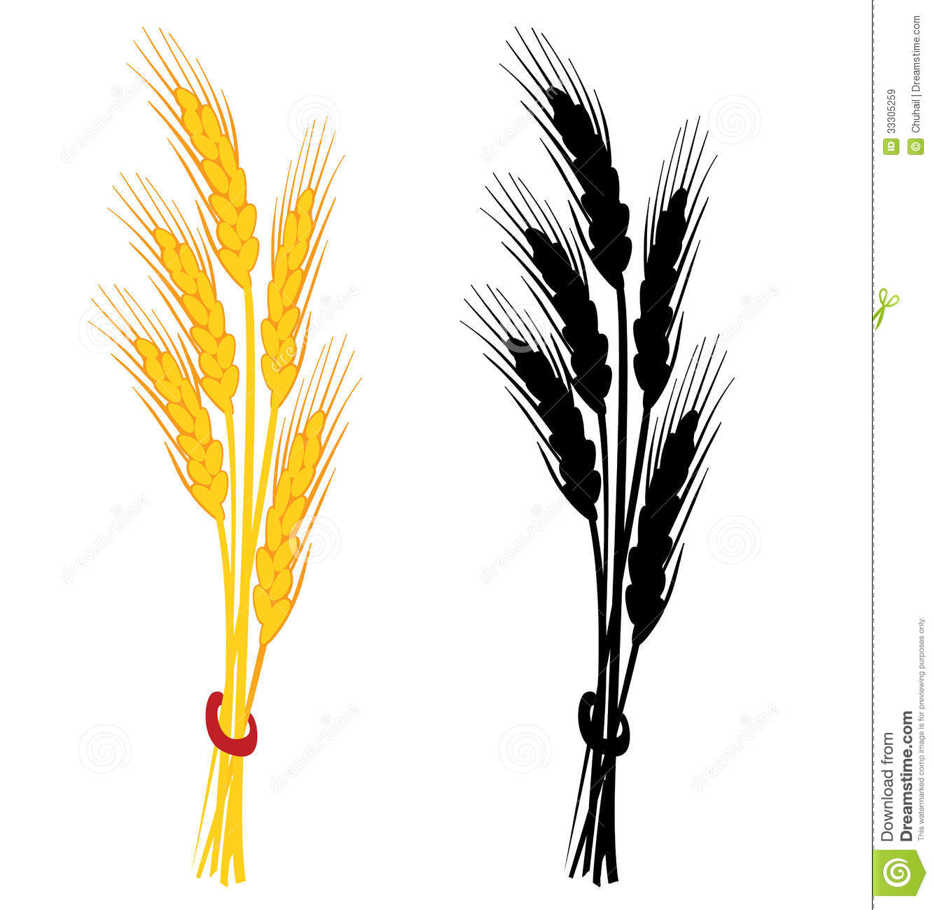 Wheat Ear Vector Illustration Royalty Free Stock Images   Image