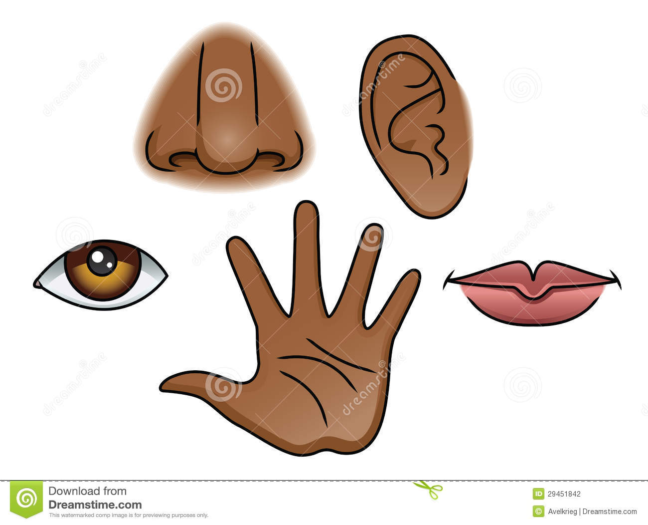 Sense Of Sight Clipart - Clipart Suggest