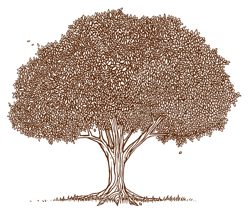 pecan tree clipart clipart suggest